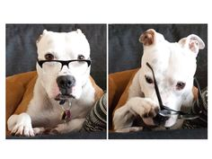 Rescue Dog Charities - How to Donate for Dogs (Fetch  donates 100% of their profits to animal rescue and adoption efforts when you buy a pair of glasses).