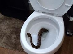 A Texas kid spotted a rattlesnake in the toilet — and then the snake-removal crew found 23 more