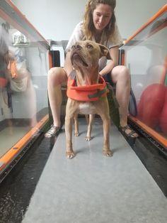 Paralyzed Dog, Dog Photos, Cat Memes, Journey, Cats, Animals, Gatos, Animales, Animaux