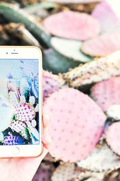 FREEBIE // Beautiful pastel pink / green / blue cactus digital downloadable wallpapers for phone / iPhone /desktop computer | Photography