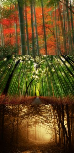 47 Best Bamboo Forest Images Nature Beautiful Places Beautiful World