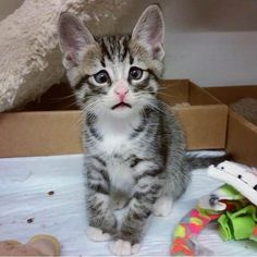 One Look At This Kitty Will Melt Your Heart - We Love Cats and Kittens