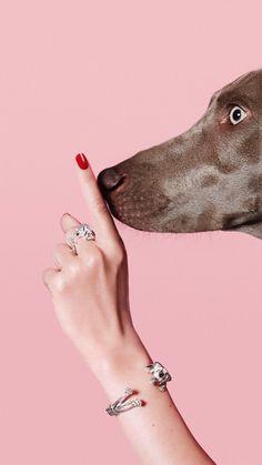 Dog fever Milano l represented Jewelry Photography, Creative Photography, Animal Photography, Fashion Photography, Daphne Blake, Tier Fotos, Weimaraner, Photomontage, Pop Art