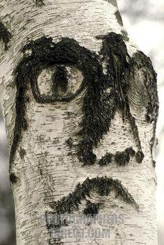 face on tree bark