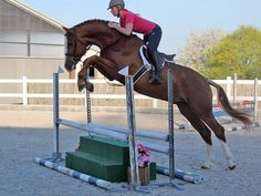Horses and Ponies for sale, Leo - Holsteiner - Hunter - Horse For Sale in Czech Republic, Europe Horse Stalls, Horse Barns, Very Big Dog, Horse Saddles, Western Saddles, Hunter Horse, Different Horse Breeds, Ponies For Sale, Dressage Horses