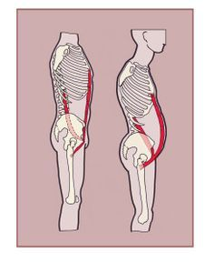 The psoas major and the rectus abdominis muscles have an important relationship inside the body even though they don't literally work together. Muscles relate to each other in many different ways. Sometimes they work in opposition—for the hamstring to lengthen the quadriceps must shorten. This happen through the process of reciprocal inhibition and most often occurs ...
