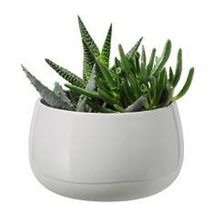 IKEA - SUCCULENT, Pflanze mit Übertopf (9.99)