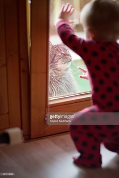 10 month old Baby pointing at Maine Coon cat outside the window.