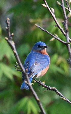 Bluebird                                                                                                                                                                                 More