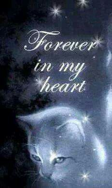 To all my the beautiful Cats we have had and lost 💔 Pet Loss Quotes, Cat Quotes, Animals And Pets, Funny Animals, Cute Animals, Beautiful Cats, Animals Beautiful, Cute Cats, Funny Cats