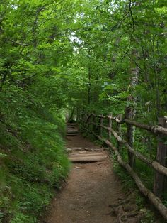 The Appalachian Trail....this pic was taken on our first trip together to the Smokey Mountains....