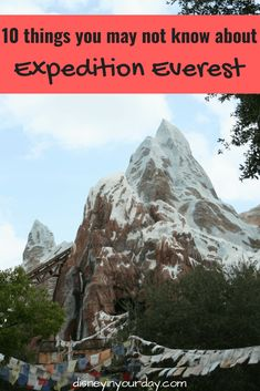 One of the most popular attractions in Animal Kingdom, there are lots of fun facts about Expedition Everest - how many did you know? Walt Disney World Orlando, Disney World Parks, Disney World Vacation, Disney World Resorts, Disney Vacations, Disney Travel, Family Vacations, Disney Cruise Tips, Disney Vacation Planning