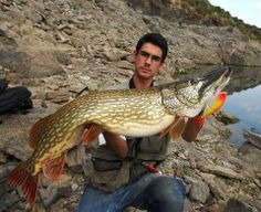 Check out the beautiful markings on this European quarry pike.