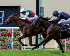 John and Tanya Gunther's storybook season got even better at Ascot June as their homebred colt Without Parole (GB) bested nine rivals to land the Royal meeting's St James's Palace Stakes Horse Racing, Race Horses, St James's Palace, Sport Of Kings, Thoroughbred Horse, Royal Ascot, The St, Parlour, Athletes