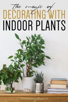 DECORATING WITH INDOOR PLANTS - Discover how easy and amazing indoor plants can transform a room. These gorgeous indoor potted plants really liven up a room, adding colour and life! Interior plants, potted plants, pot plants, indoor greenery, home decor, cordyline, ficus, caring for indoor plants, yates indoor plants, home renovations
