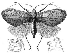flying insect diagram as a tattoo