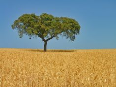 The vast and long rolling plains and cork tree clumps of Alentejo.