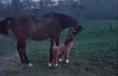 Nope, You Are A Fake Horse. This Horse Will Not Be Fooled And His Reaction Is Hilarious.