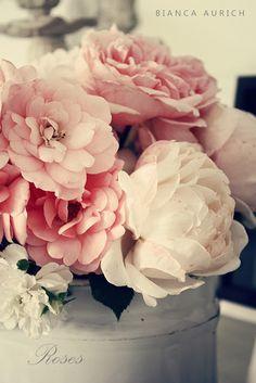 Pink Roses.......  love them!