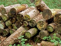 Wildlife garden: How to build a log pile to attract insects