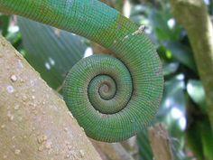 Chameleon by eirecubdc, via Flickr