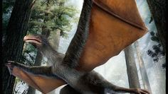 "Dinosaur fossil with bat wings is first of its kind  A ""bizarre"" bat-like dinosaur, just discovered by a farmer, had wings made of skin rather than feathers"