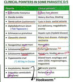 hatékony parazitaellenes szer ember számára parazita profilaxis tabletták