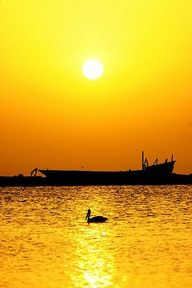 Pelican and Dhow at Sunset, Tihama, Yemen. Eric Lafforgue.