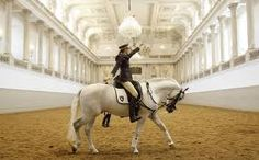 the spanish riding school of vienna - Google Search