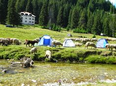 Bucegi mountains Romania, Places To See, Beautiful Places, Mountains, Country, People, Travel, Animals, Green