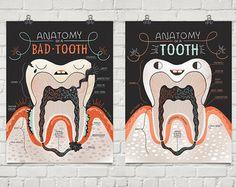Anatomía de un diente malo y bueno: lámina dos y cartel oferta