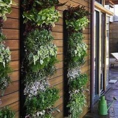 Idée pour la terrasse ou le mur de la maison