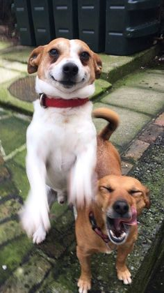 "Who says ""Dogs don't smile or laugh?"" Oscar (left) and Riley (right) are rescue dogs"