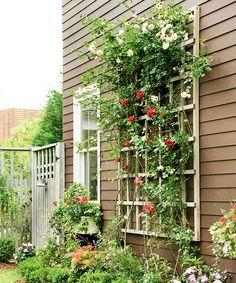 Enkel rosenspaljé mot väggen