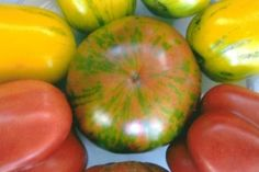 Heirloom Tomatos Photo Note Cards