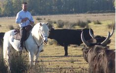 #horse #camargue #bull #ruyblass http://www.chevalcamargue.fr