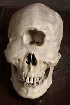 Skull of a Cyclops? #MythicCreatures