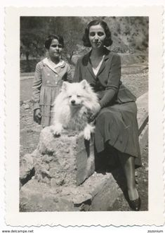 REAL PHOTO, Woman Girl Kid And Dog, German Spitz, Hund, Chien, Cane, Old Photo ORIGINAL - Hunde American Eskimo Dog, Small Dog Breeds, Small Breed, German Spitz, Spitz Dogs, Vintage Photo Booths, Japanese Spitz, Old Images, Vintage Dog