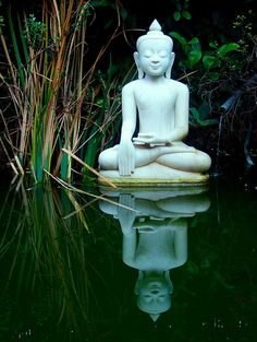 Zen To me, this is not an endorsement of a particular religion, rather the idea of harmony and quiet peace in one's life.a life in balance Lotus Buddha, Art Buddha, Buddha Statues, Buddha Wisdom, Zen Meditation, Chakra Meditation, Namaste, Thomas Merton, Little Buddha