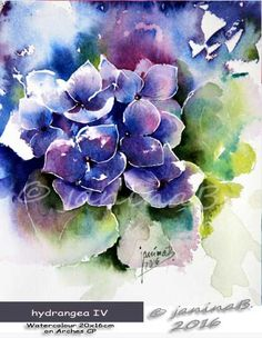 hydrangea IV / Watercolour 20x16cm on Arches CP © janinaB. 2016