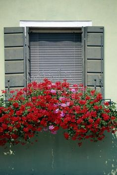 Full-sun Annual Flowers For Window Boxes