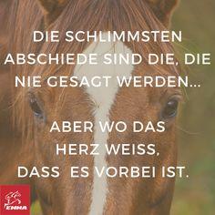 Pferdesprüche & Muskelaufbau-emma-pferdefuttershop.de 562