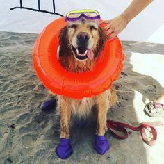 Weekly Local Dog Events: August 29th - September 4th