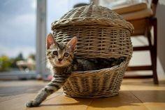 ☆*CATS☆*