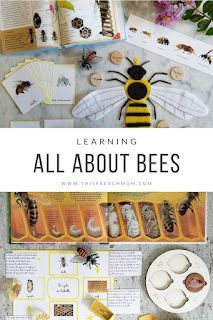 Aug 29, 2019 - Montessori and nature-inspired arts, crafts, learning and mommyhood Bee Activities, Montessori Activities, Homeschool Kindergarten, Homeschooling, Inspired Learning, Bee Theme, Project Based Learning, Crafts For Kids, Scientific Method