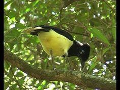 Aves del Uruguay.  Rincón de Franquía .VIDEO PRECIOSO++++