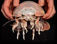 September 2012 | Marine Sea Creatures