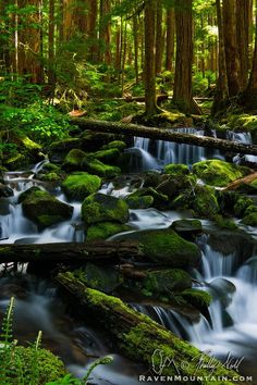 Temperate Rain Forest - Sol Duc Falls Trail, Olympic National Park, Washington