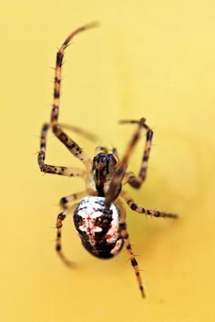 Gardening: Any home remedies to keep spiders out of the house?    http://worldgardening.blogspot.com/2012/09/any-home-remedies-to-keep-spiders-out.html