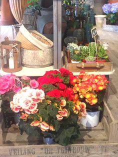 Varietè flowers shop Prato Via Santa Trinita